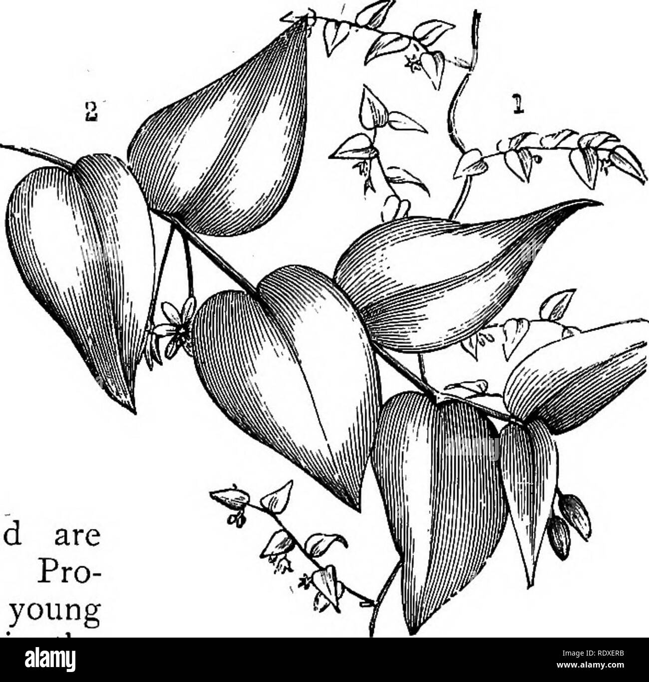 Das Buch Der Gartenarbeit Ein Handbuch Der Gartenbau Gartenbau