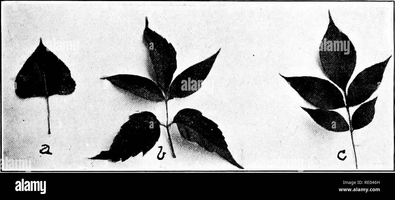 Atemberaubend Pappeln Baum Samen Stockfotos & Pappeln Baum Samen Bilder - Alamy @ZW_48