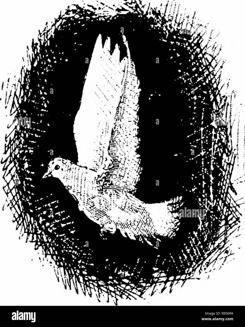 beleuchtung vögel