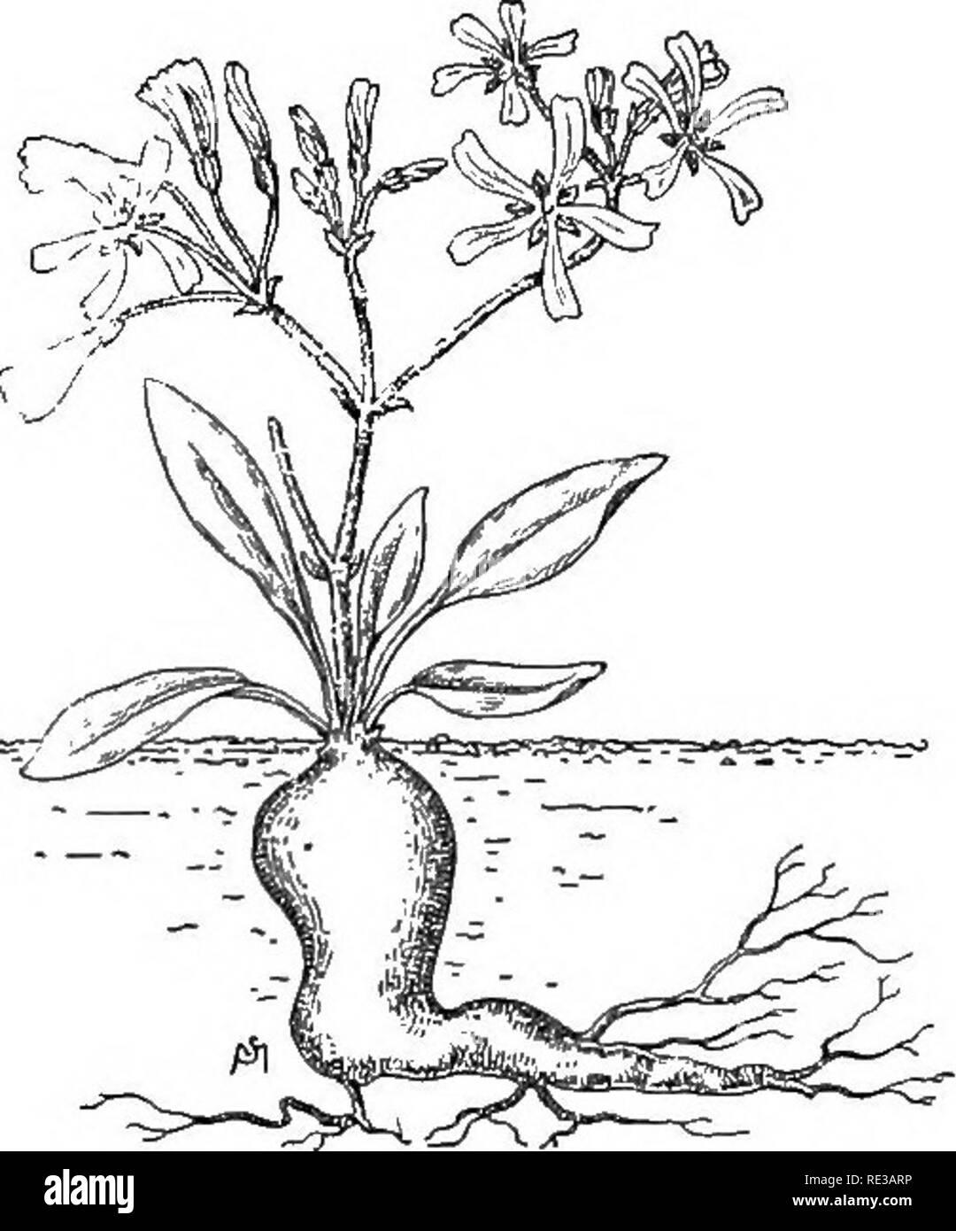 Einführung In Die Botanik Botanik Wurzeln Und Ihrer Beziehung Zu