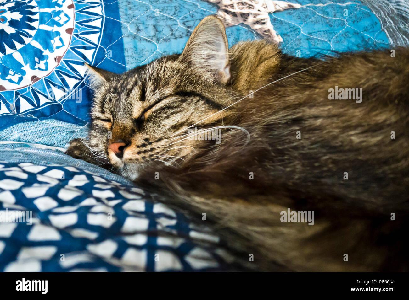 Inländische enrage Katze schlafend auf der Couch Stockbild