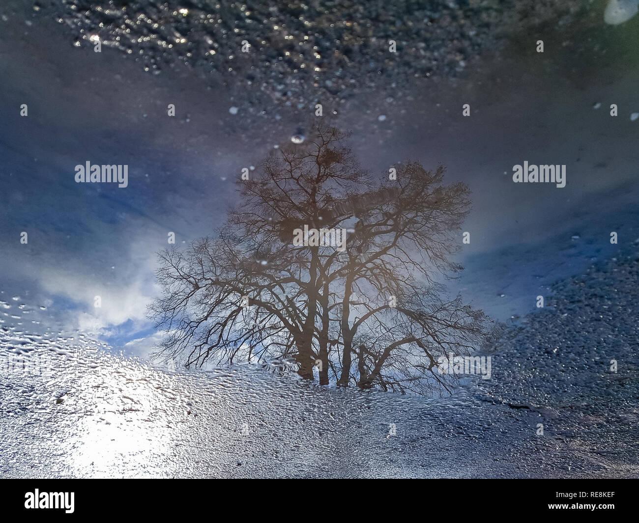 Eine Straße mit einer Wasserpfütze widerspiegelt einen entfernten Baum und die blauen bewölkten Himmel Stockfoto