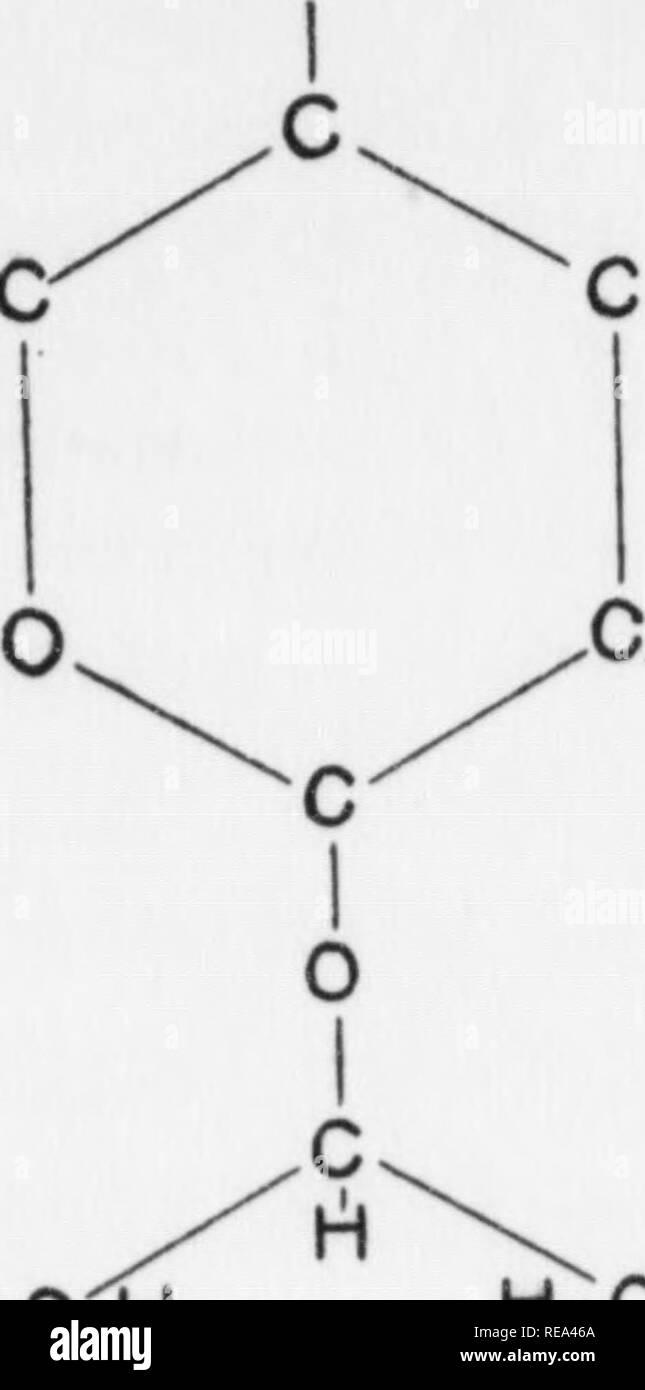 """. Beiträge der botanischen Labor, Bd. 7. Botanik; Botanik. 418 DIE AMERIKANISCHE NATURFORSCHER [Voi. LXTTI C-C. HO-C-H HO - C - C - G' Bild. 4. HOHX-C H O I c h-C-CH, OH C-OH H; C-OH C I 0 I C. H C I 0 I c HO-C-H-HO-C-hl H-C-CHjOH H C I O M C I 0 I A. Drei*' glucose Rückstände"""" Einheiten (eine und eine halbe Unks) einer Zellulose Kette. B. ein Molekül des cellobiose. Ein Ring - mit einer Sauerstoff-Brücke, die Verbindung zwischen Auto-bons 1 und 4 - ist ein weiterer Ring, ist das reflektierte Bild der ersten, d. h. er wird um 180° gedreht. Diese beiden Einheiten, als ein Paar, ein Glied in der Kette cellulose darstellen. Stockbild"""