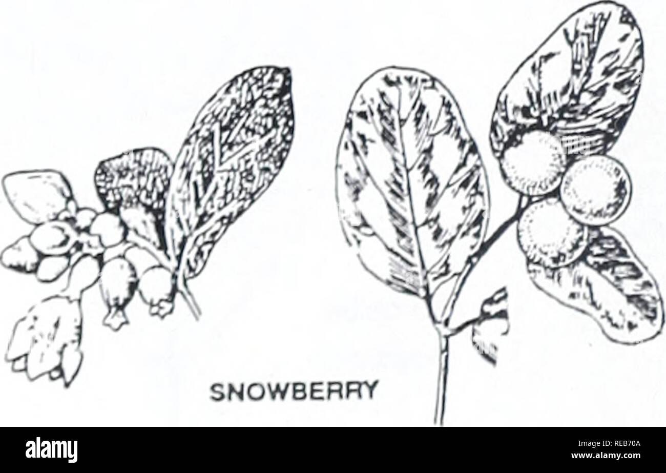 Concord Bäume Und Sträucher Botanik Bäume Sträucher Sträucher