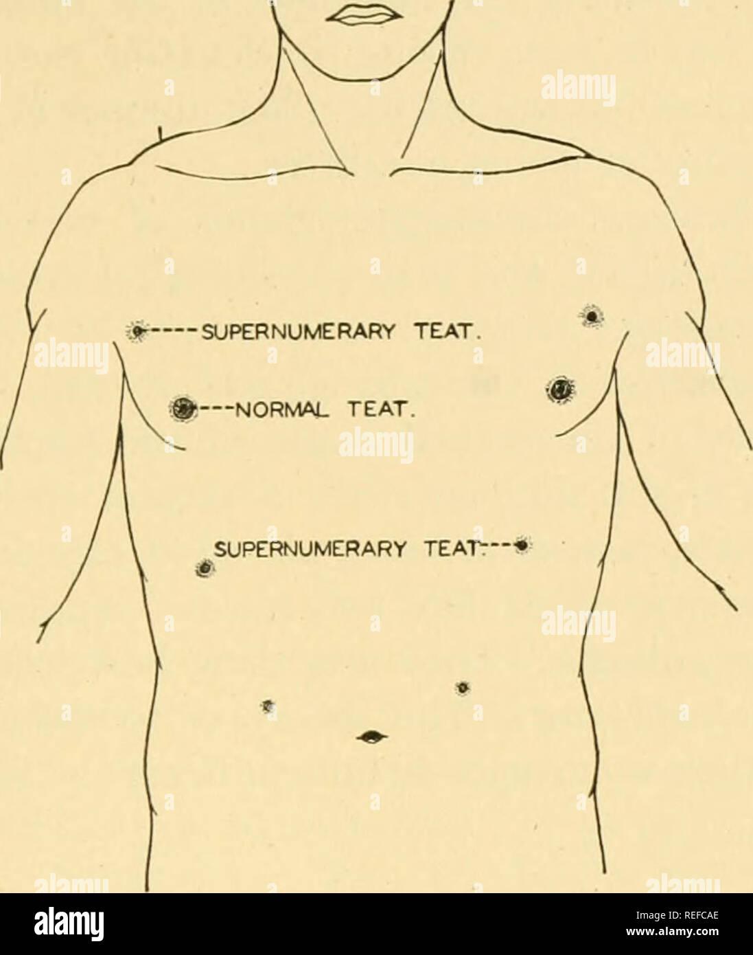 Integumentary System Body Stockfotos Integumentary System Body