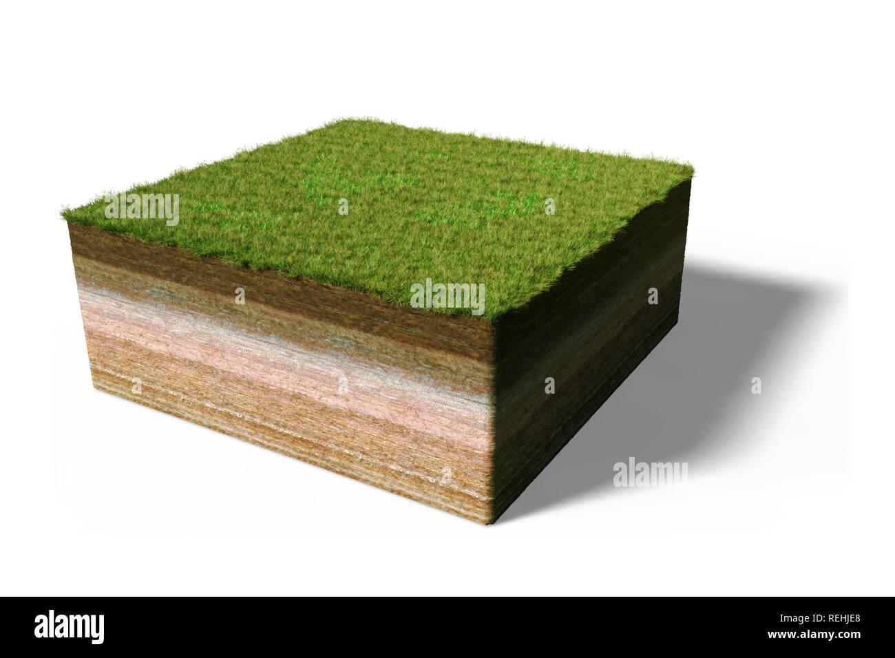 Fußboden Querschnitt ~ Modell der einen querschnitt der boden mit gras d illustration