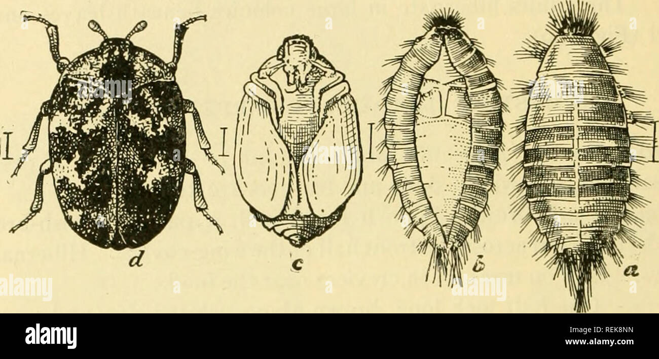 Klasse Buch Der Wirtschaftlichen Entomologie Mit Besonderem Bezug
