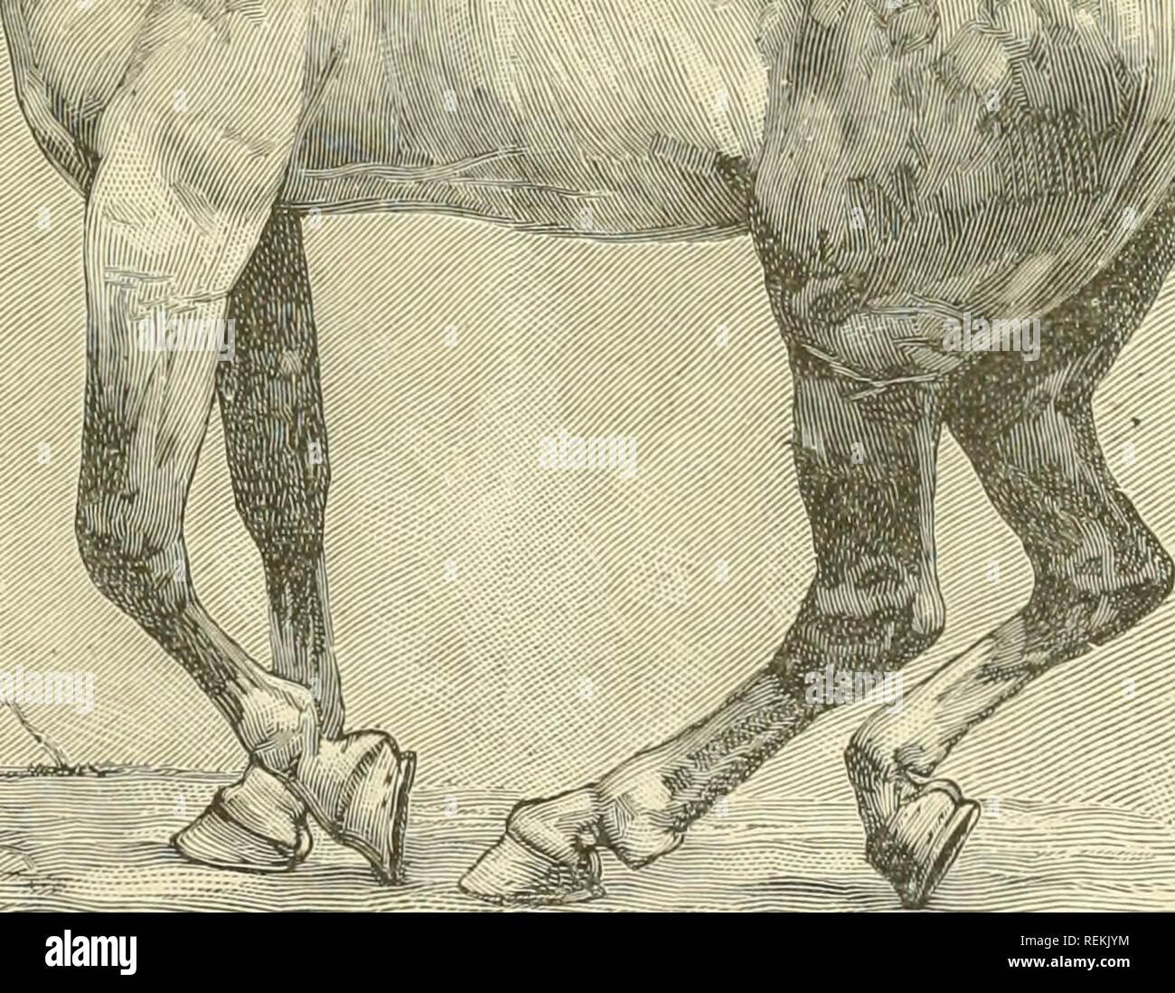 Eracpabi: steißbeinprellung oder bruch