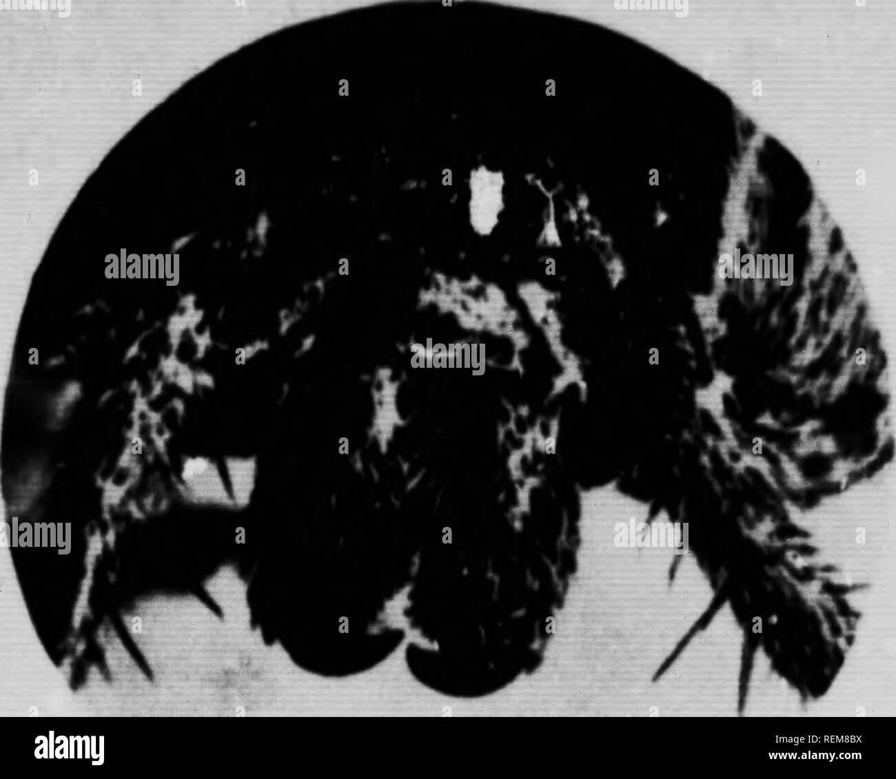 . Insekt Biographien mit Stift und Kamera [microform]. Insekten; Insectes; Entomologie; Entomologie. . Bitte beachten Sie, dass diese Bilder sind von der gescannten Seite Bilder, die digital für die Lesbarkeit verbessert haben mögen - Färbung und Aussehen dieser Abbildungen können nicht perfekt dem Original ähneln. extrahiert. Bezirk, John J., b. 1875. Toronto: Bell& Cockburn Stockbild