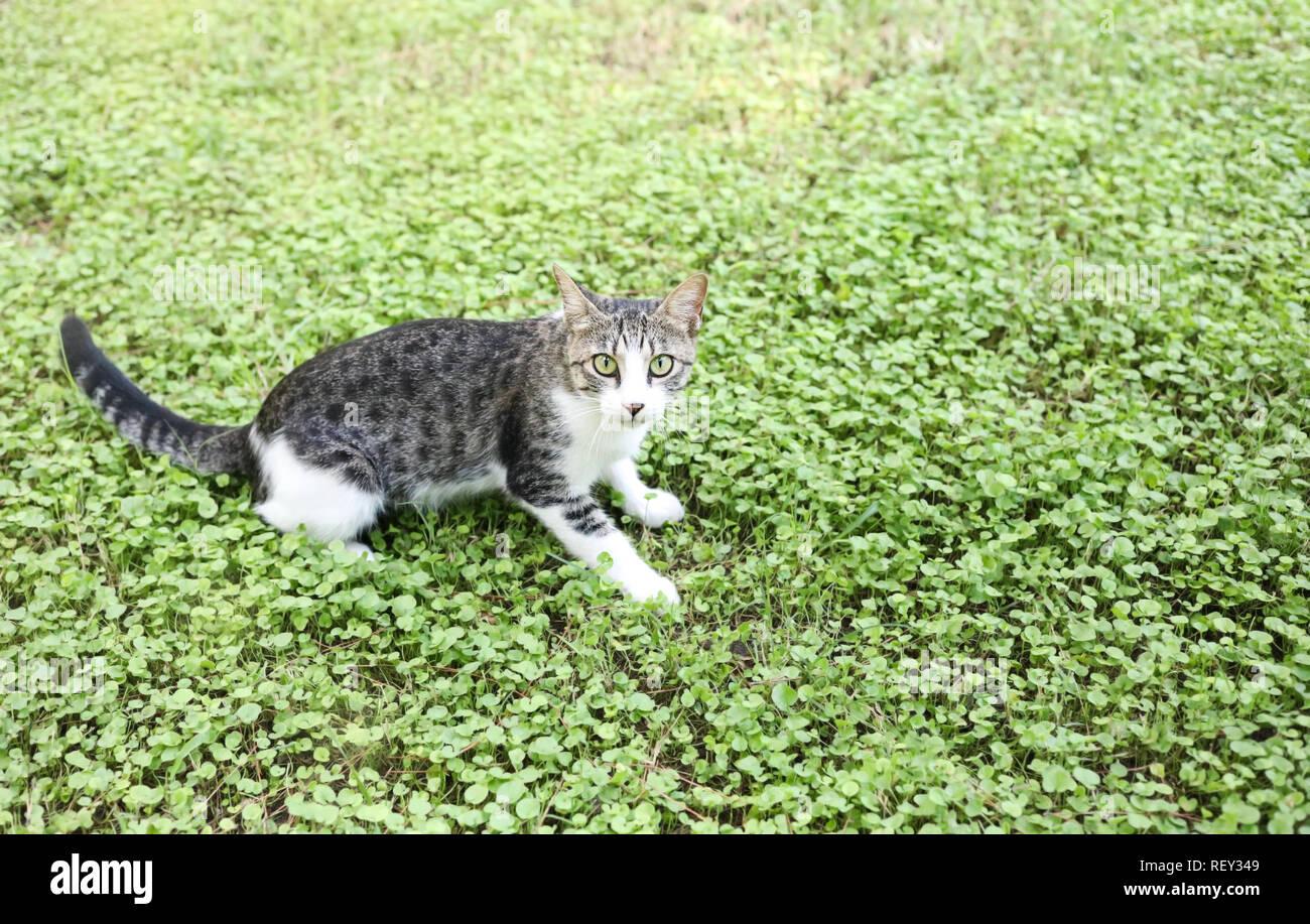 Angst weiß-graue Katze sitzt auf grünem Gras. Stockbild