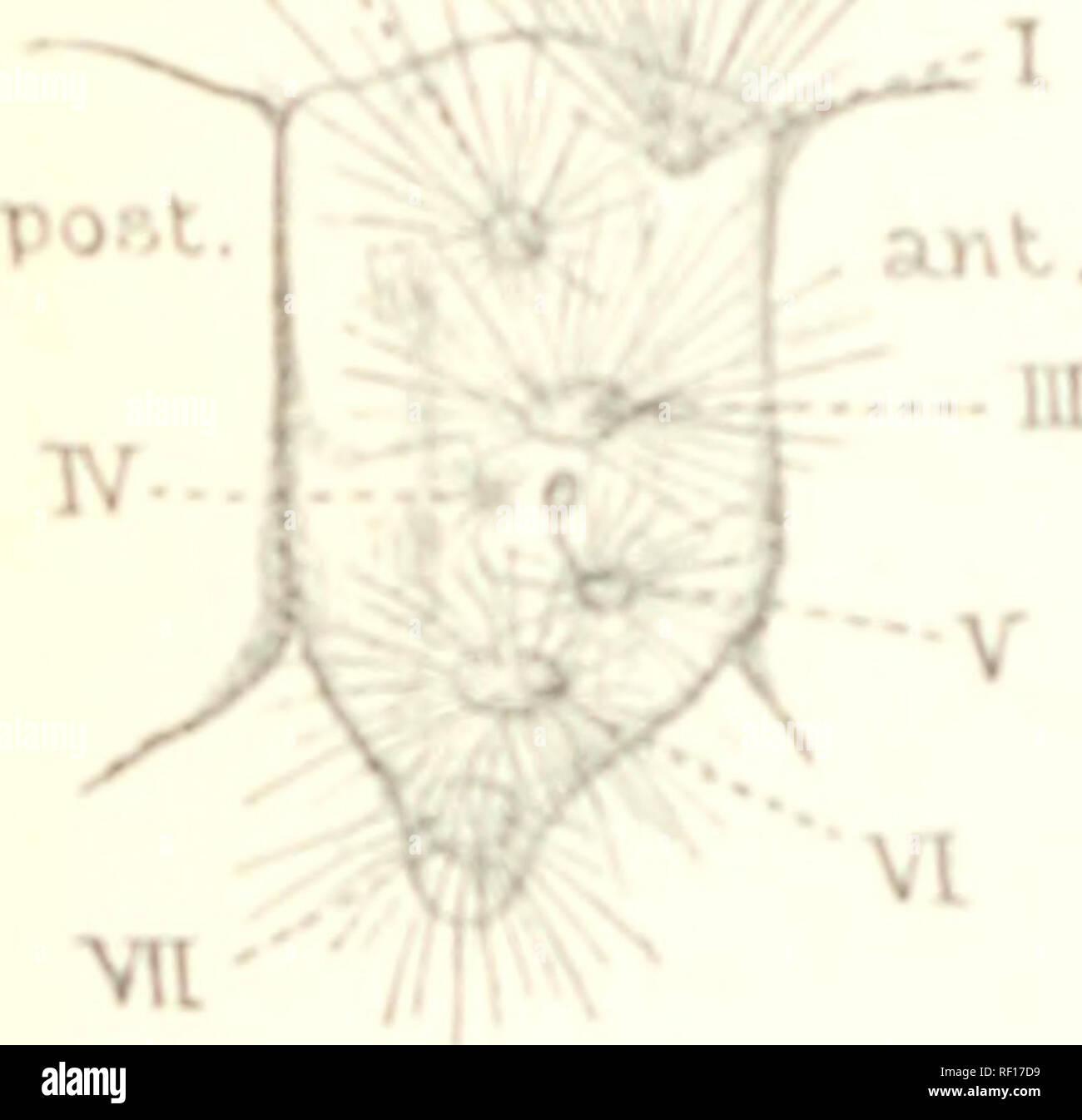 Katalog der Lepidoptera Phalà ¦ næim British Museum ...