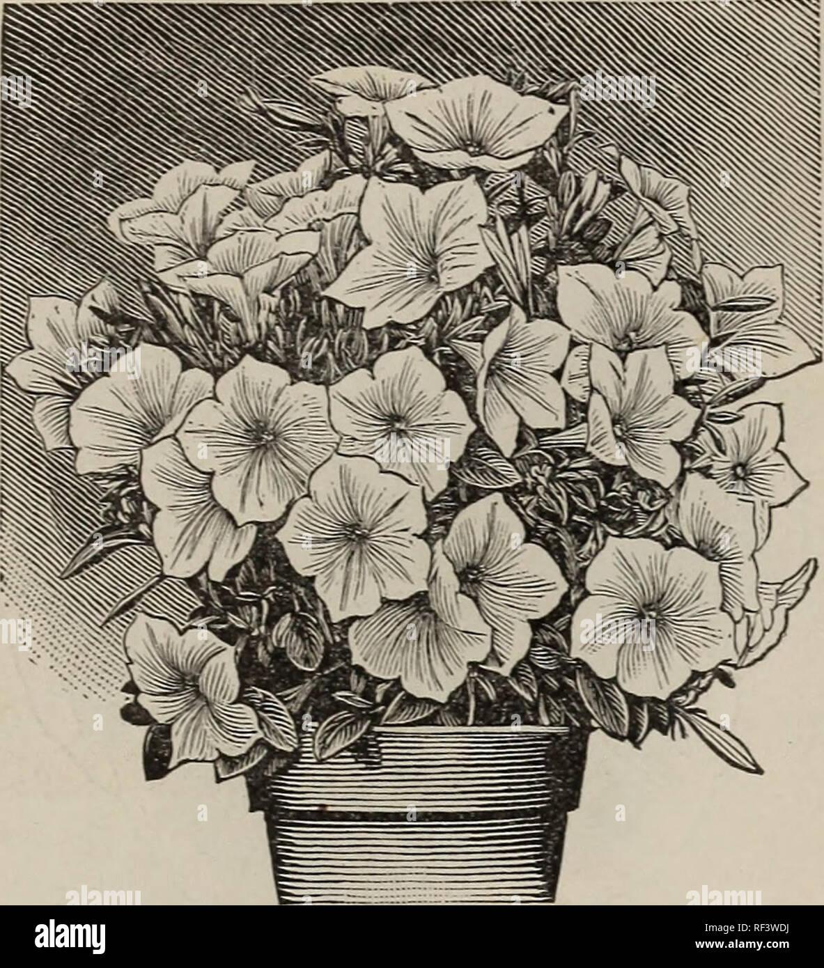 1901 Johnson Stokes Garten Und Hof Baumschulen Gartenbau