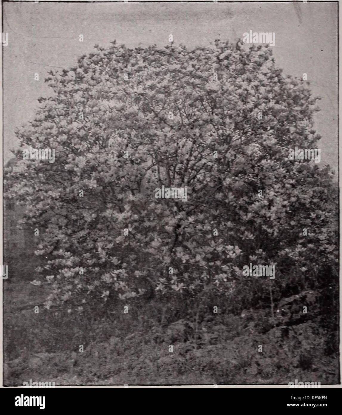 Katalog Der Obst Und Zierbäume Kleine Früchte Sträucher