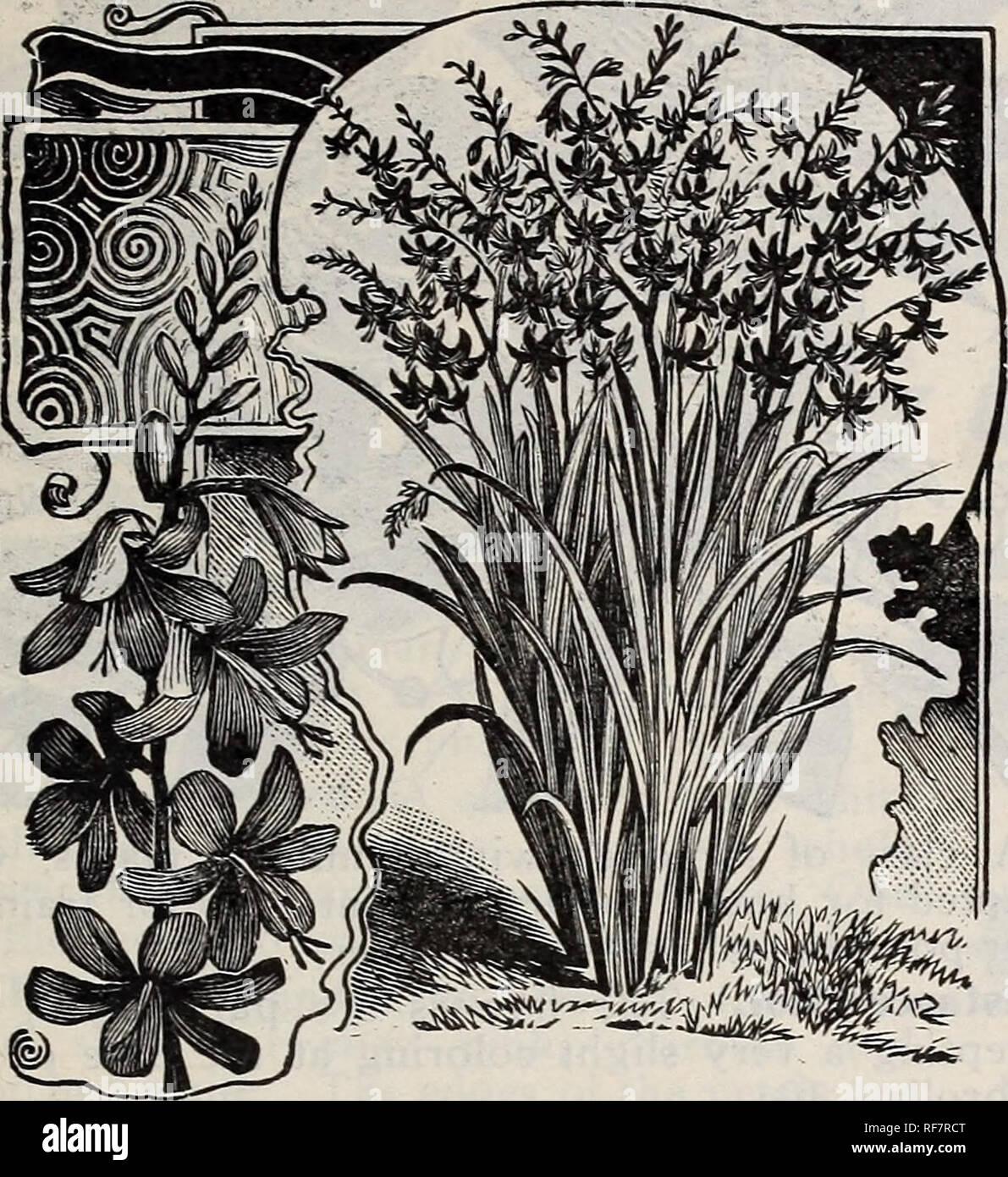 Frühjahr 1900 Baumschulen Ohio Painesville Kataloge Gemüse Samen