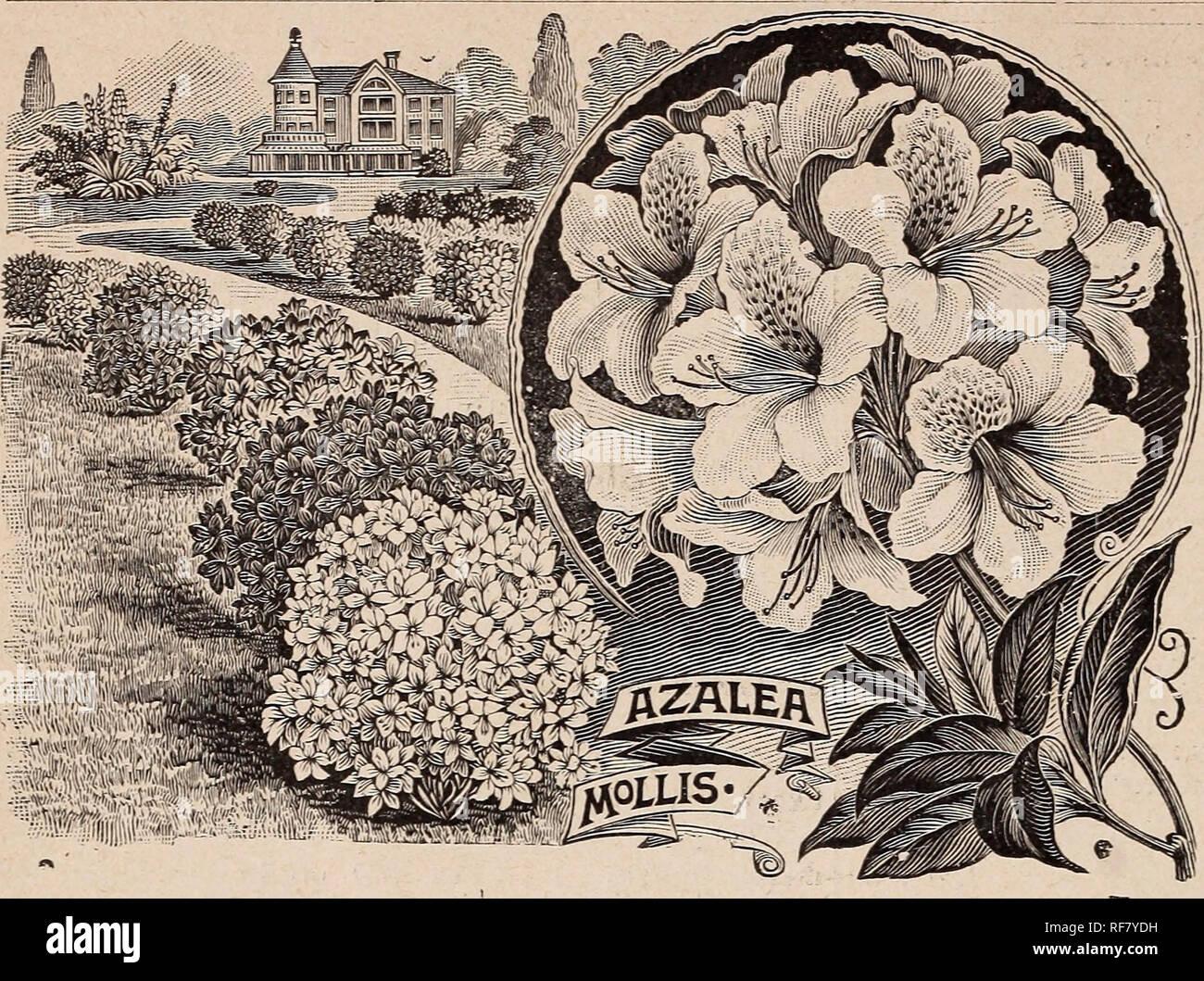 Grosshandel Fur Floristen Preisliste Pflanzen Blumenzwiebeln