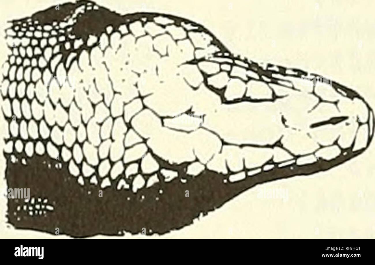 erwachsenen pelzigen reptil kunst