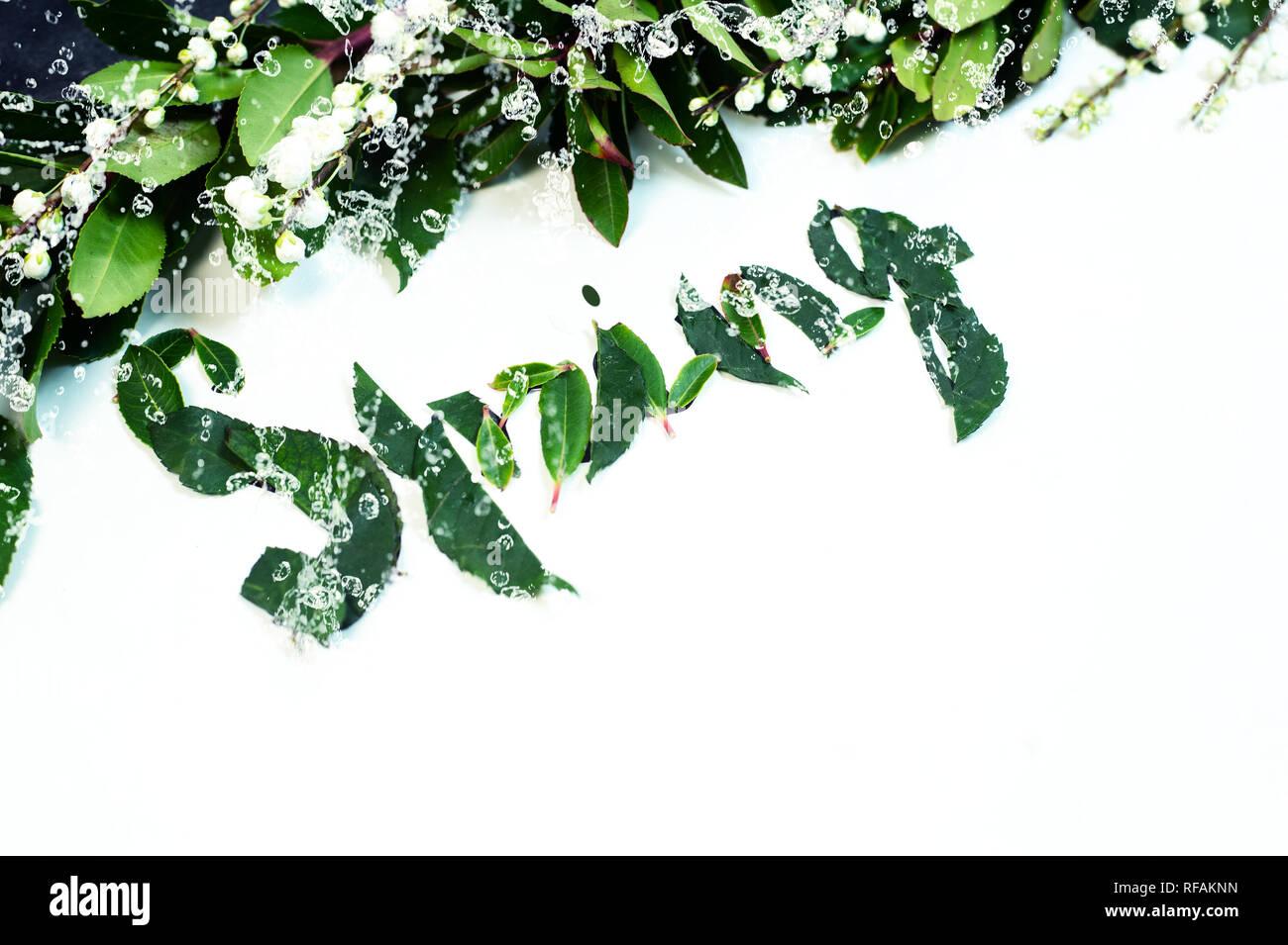 Grünes Blatt mit Wassertropfen Hintergrund Stockfoto