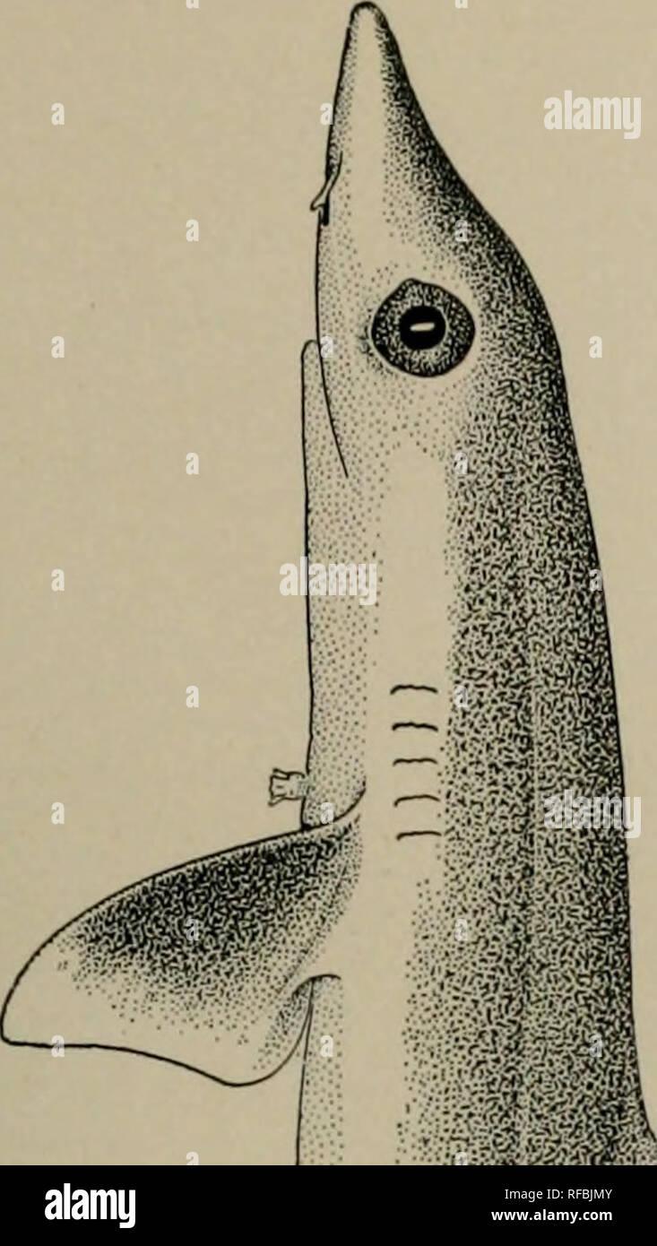 newest b4b4e 751bd . Ein Katalog von den Fischen der Insel Formosa, Taiwan  Auf der Grundlage  der Sammlungen von Dr. ...