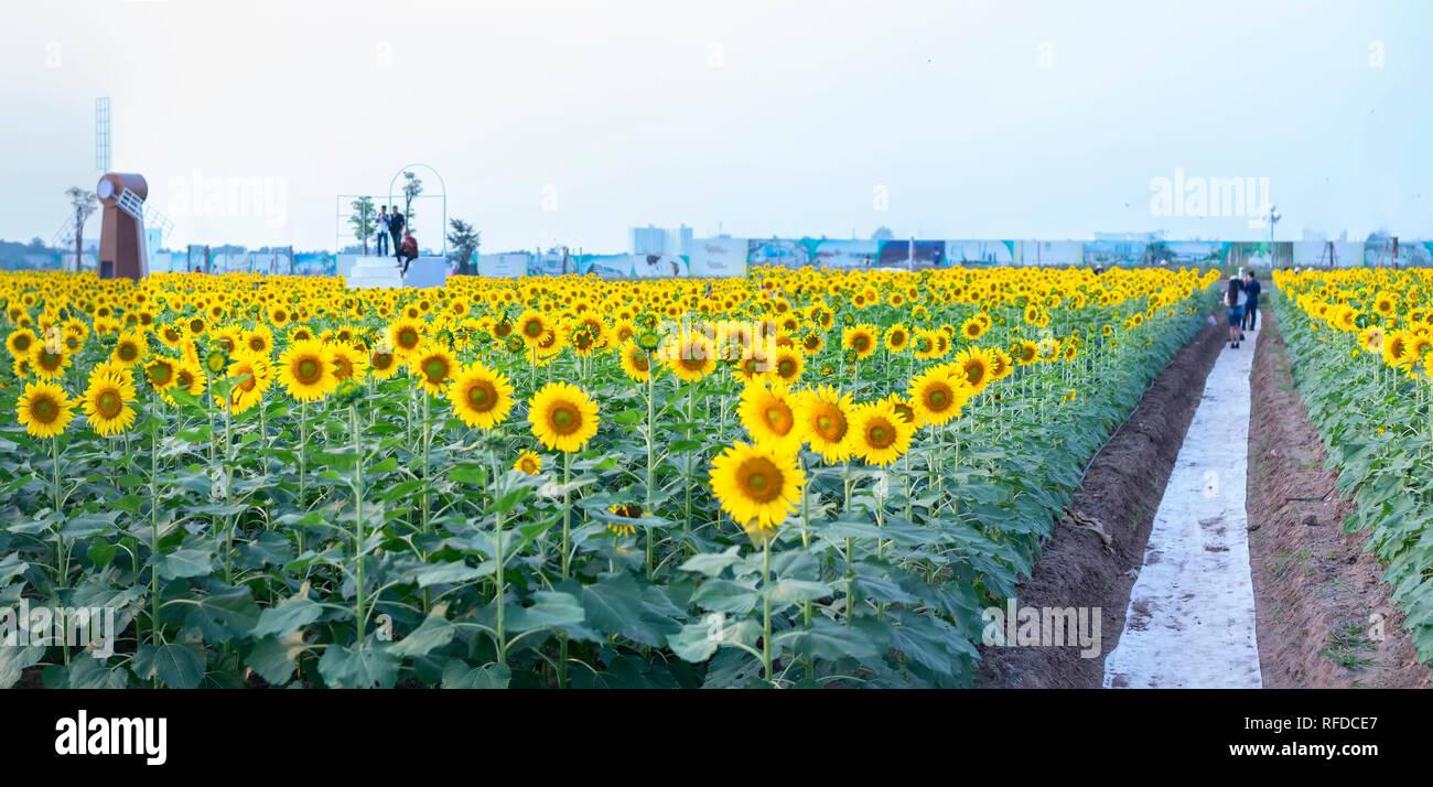 Sonnenblumen und Windmühle Dekoration Garten harmonisch harmonisieren, schönen und ruhigen Landschaften Stockbild