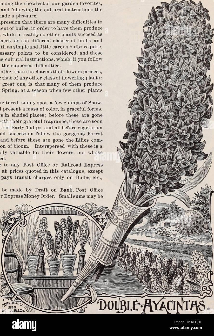 Hochwertige Pflanzliche Und Bluten Und Samen Baumschulen