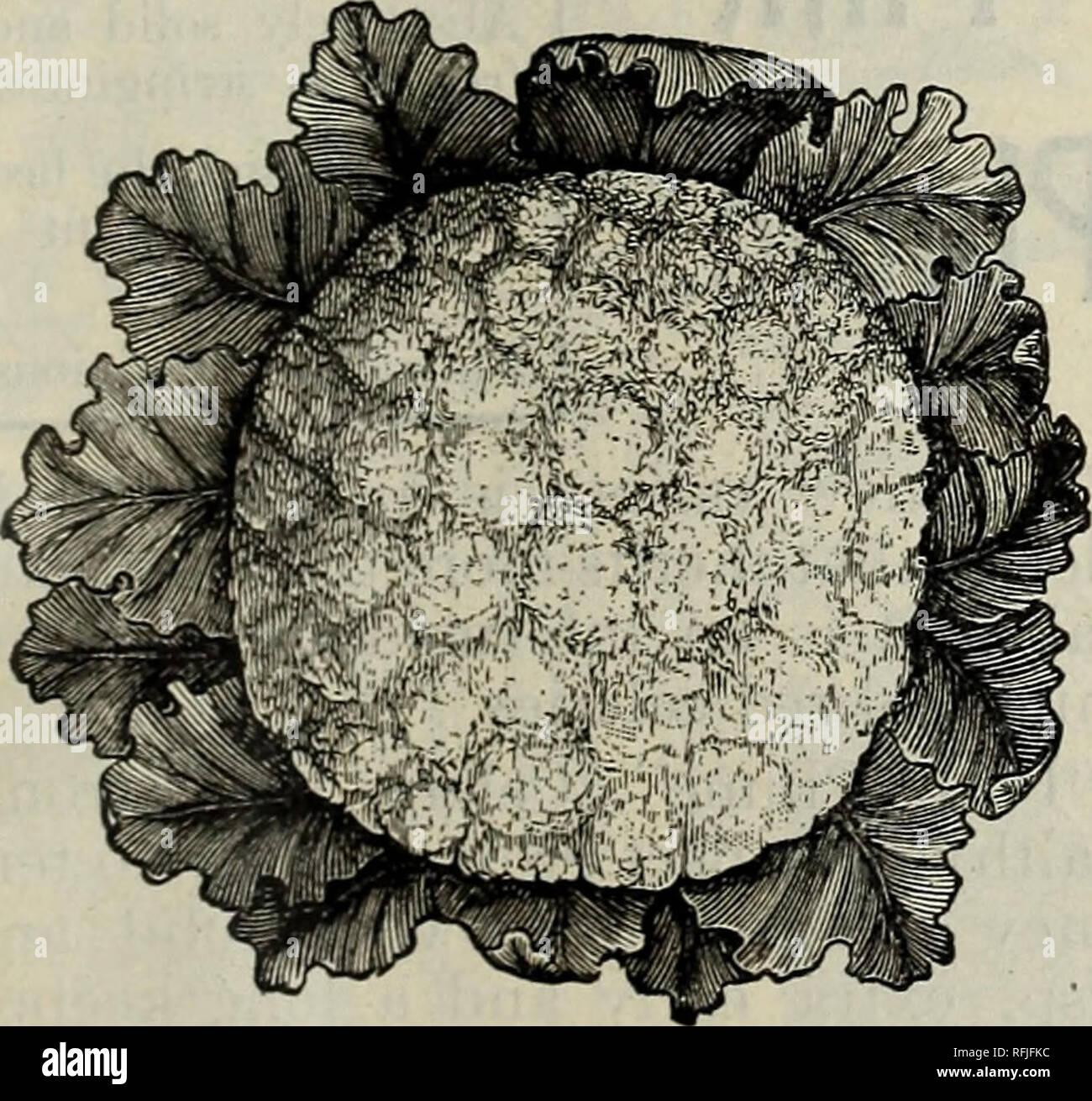 Philips 1901 Saatgut Jahrliche Alles Fur Die Farm Und Garten