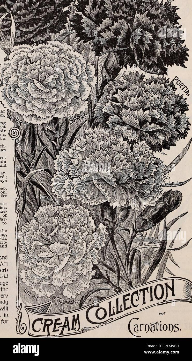 Garten & Terrasse Pflanzen, Sämereien & Zwiebeln KüHn 35 Rose Samen White Blu...... Elegant Und Anmutig