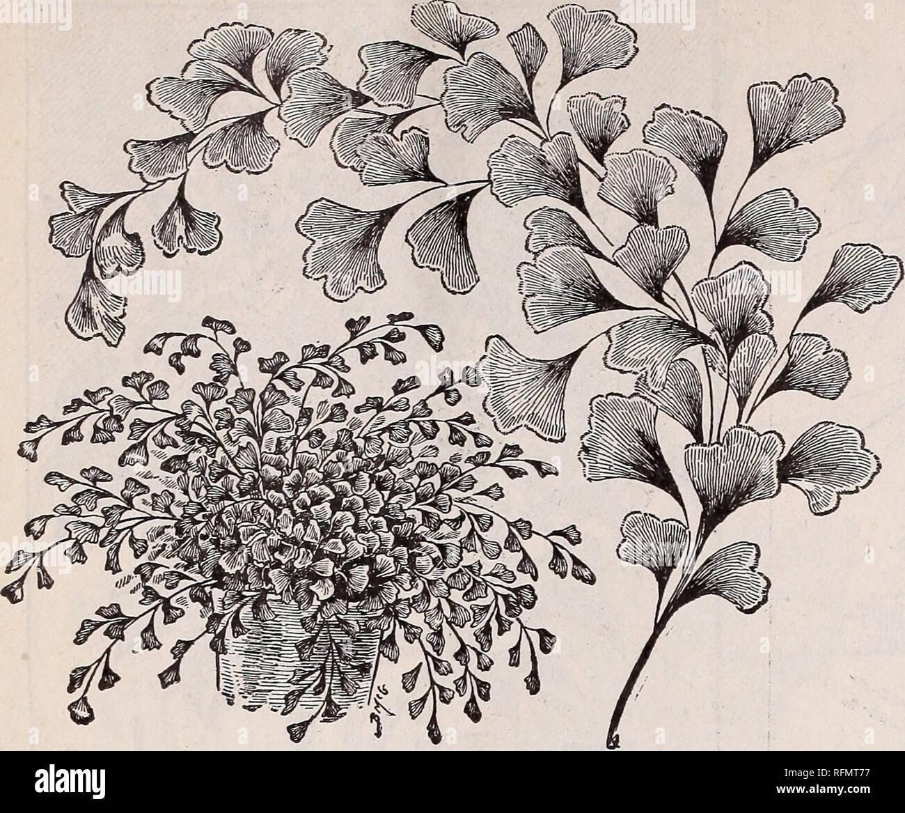 Blumen Edelsteine für winterblüher: Herbst 1899. Baumschulen ...
