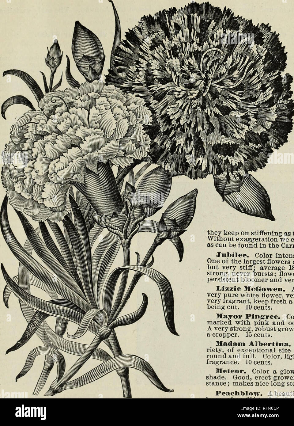 Katalog Der Blute Fruhjahr 1899 Baumschulen Indiana