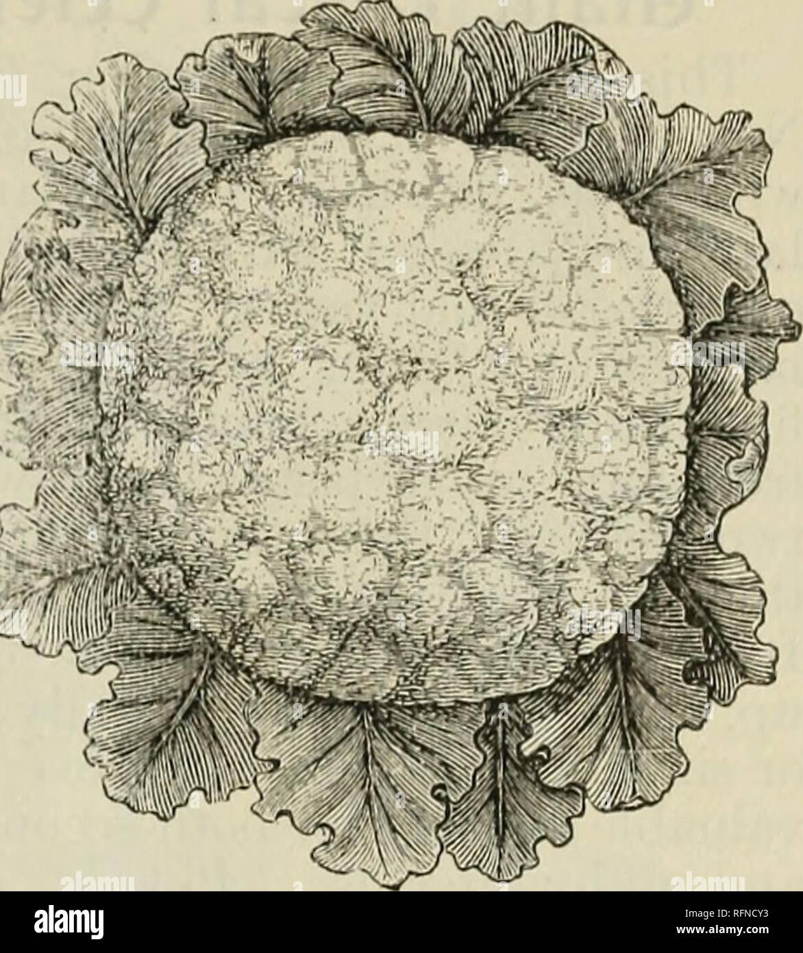 Philips Kaufer Leitfaden Fur 1897 Garten Hof Und Blumensamen