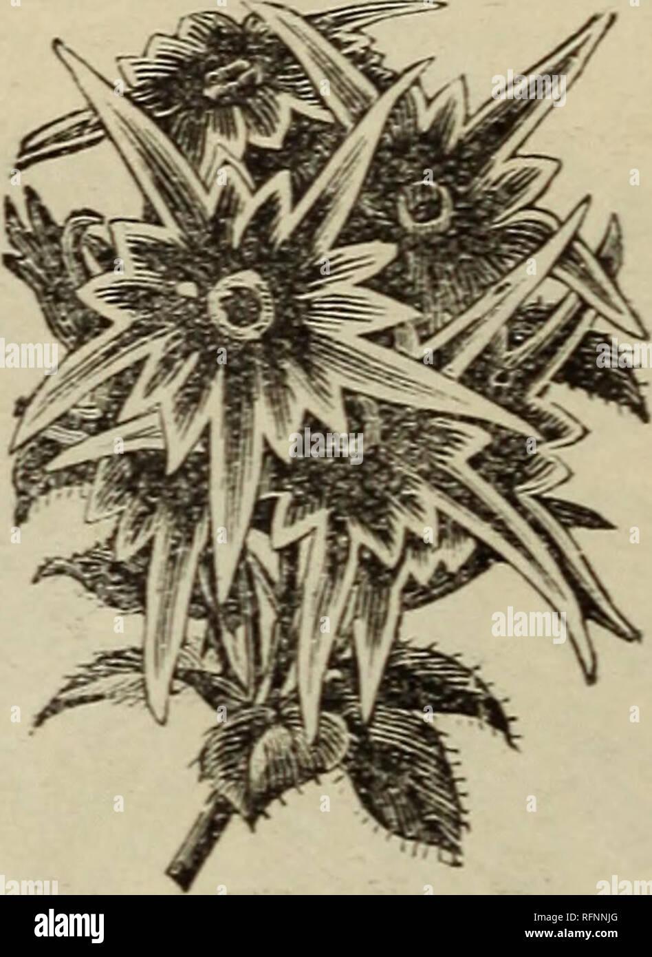 Lieblings Der Katalog für 1896 von North Western gewachsen getestet Samen &RC_28