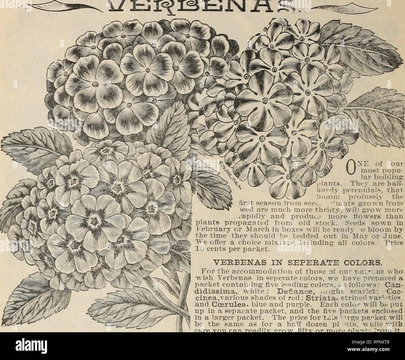 Schone Blumen Aus Der Calla Gewachshauser Baumschulen Gartenbau
