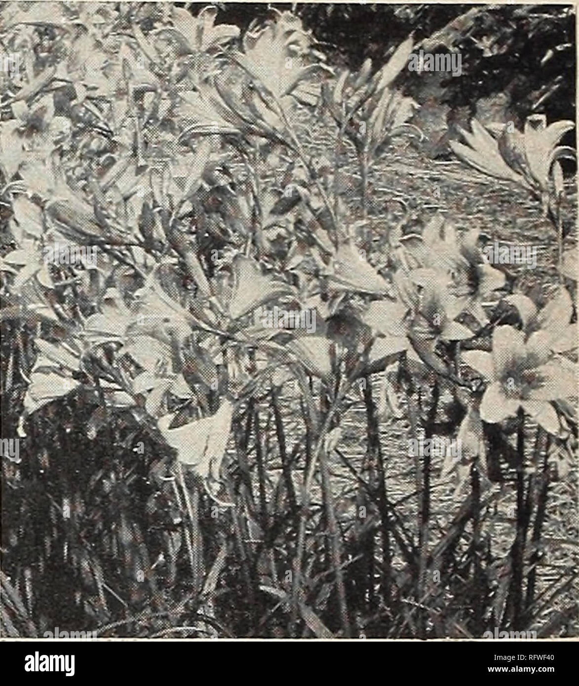 Capitol City Samen Fur 1958 Baumschulen Gartenbau Kataloge