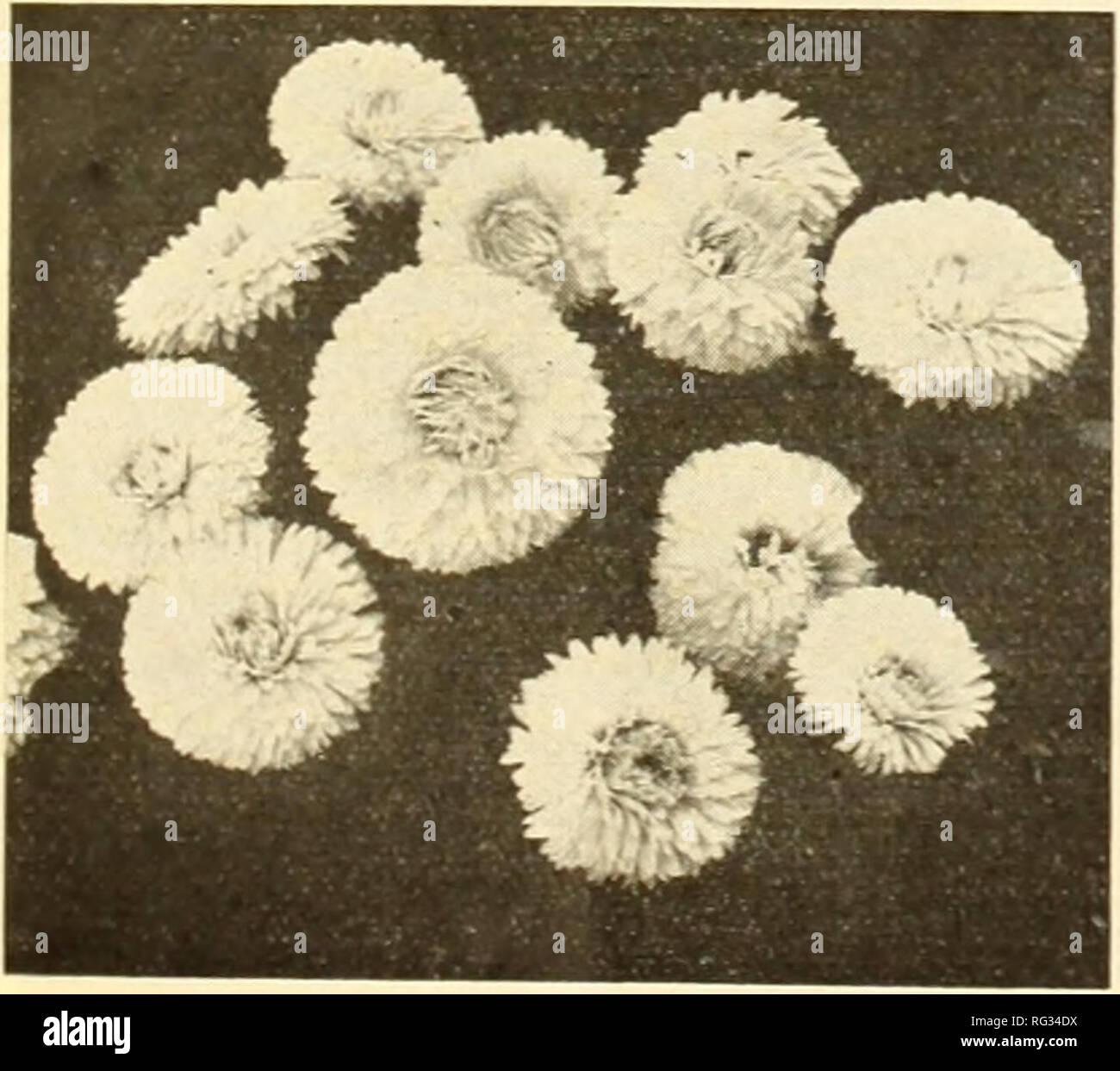 Garten Balsaminen lila 100 Samen ca