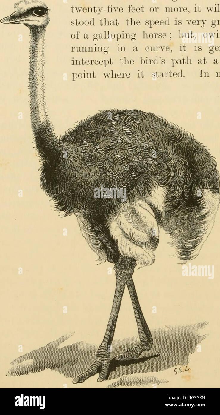 Bookauthorsh Stockfotos und  bilder Kaufen   Alamy