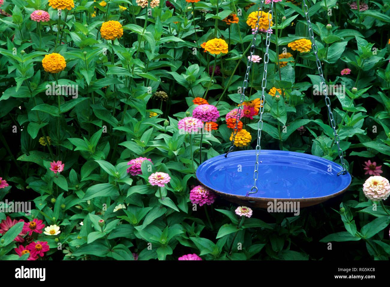 63822 00316 Hängenden Vogelbad In Vogel Blume Garten Zinnien
