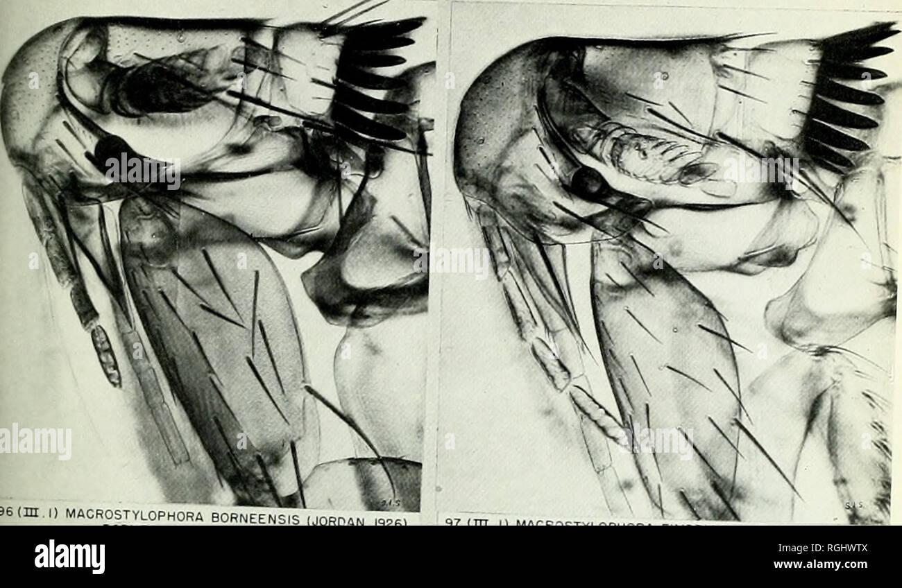 . Bulletin des British Museum (Natural History). Bull. Br. Mus.-Nat. Sein. (Zool.) 23, 10 Platte 19 KONTRASTE IN KOPF UND PROTHORAX von ~ einige Flöhe. Bitte beachten Sie, dass diese Bilder sind von der gescannten Seite Bilder, die digital für die Lesbarkeit verbessert haben mögen - Färbung und Aussehen dieser Abbildungen können nicht perfekt dem Original ähneln. extrahiert. British Museum (Natural History). London: BM (NH) Stockbild