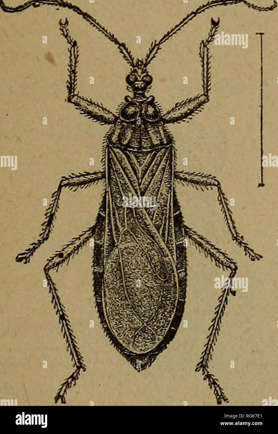 Beetles Insects Stockfotos Beetles Insects Bilder Seite 8 Alamy