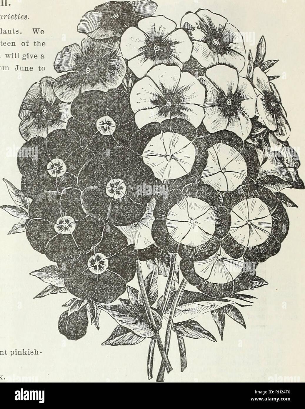 Zwiebeln Und Pflanzen Herbst 1899 Blumen Samen Kataloge