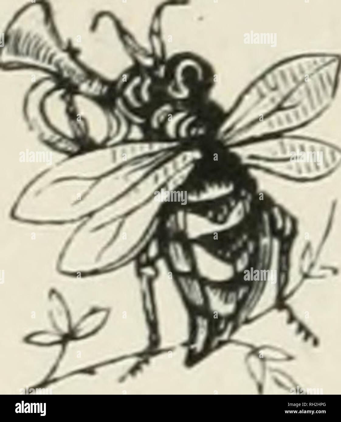 . Britische Biene des Tierhalters Führer für das Management der Bienen in beweglichen - Kamm Nesselsucht, und der Einsatz von modernen Biene-Appliances. Illustriert. Biene Kultur. Marke!. Bitte beachten Sie, dass diese Bilder sind von der gescannten Seite Bilder, die digital für die Lesbarkeit verbessert haben mögen - Färbung und Aussehen dieser Abbildungen können nicht perfekt dem Original ähneln. extrahiert. Cowan, T. W. (Thomas William), 1840-1926. London, Madgwick, Houlston Stockbild