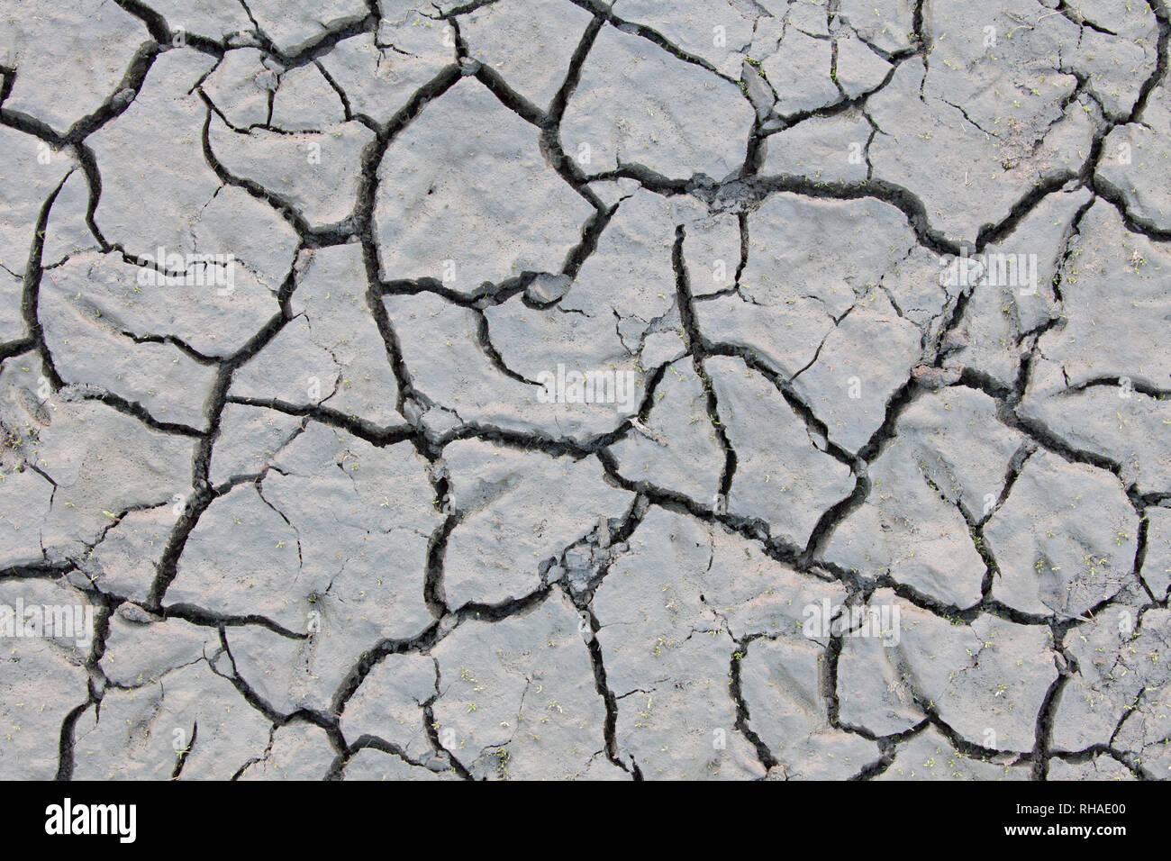 Trockene rissige Schlamm in ausgetrockneten Teich/Stream durch die lang anhaltende Trockenheit aufgrund der extremen Temperaturen im Sommer verursacht Stockfoto
