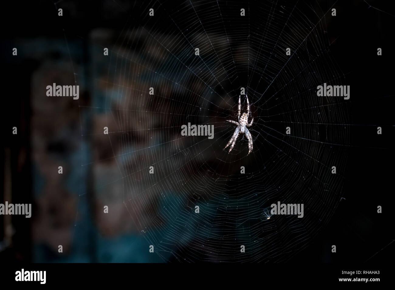 Nahaufnahme eines riesigen Spinne Muster für seine Beute auf die perfekte Threads der Net warten. Dunkle Moody grunge de-fokussierte Hintergrund. Tote Fliege o Stockbild