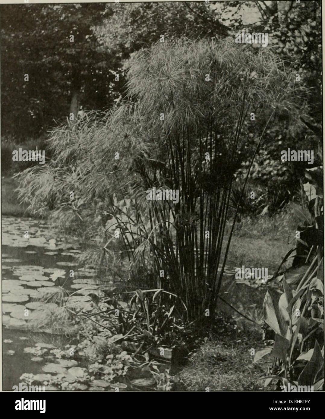 Das Buch Von Wasser Im Garten Die Ausführlich Alle Praktischen