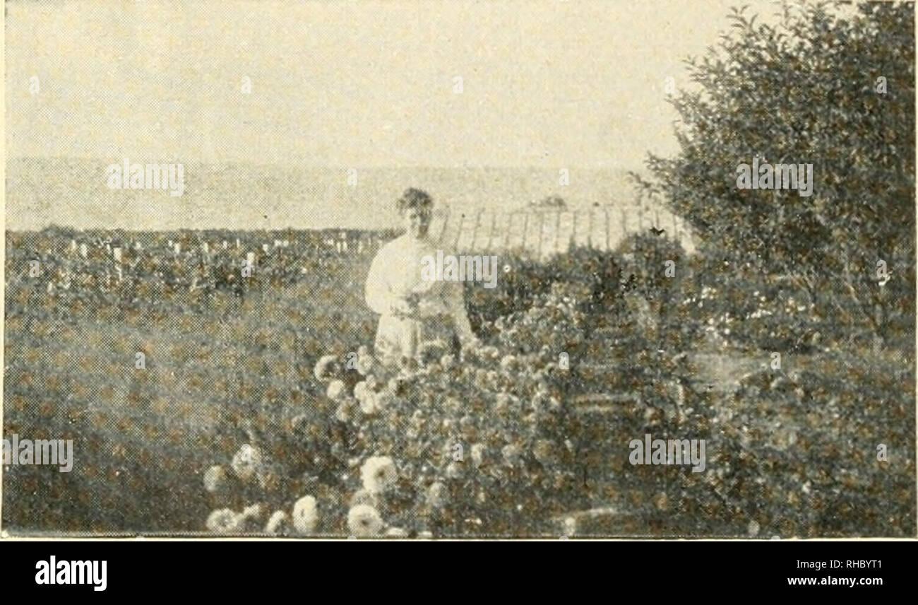 Das Buch Der Tausend Gärten Gemüseanbau Aus Dem Alten Katalog