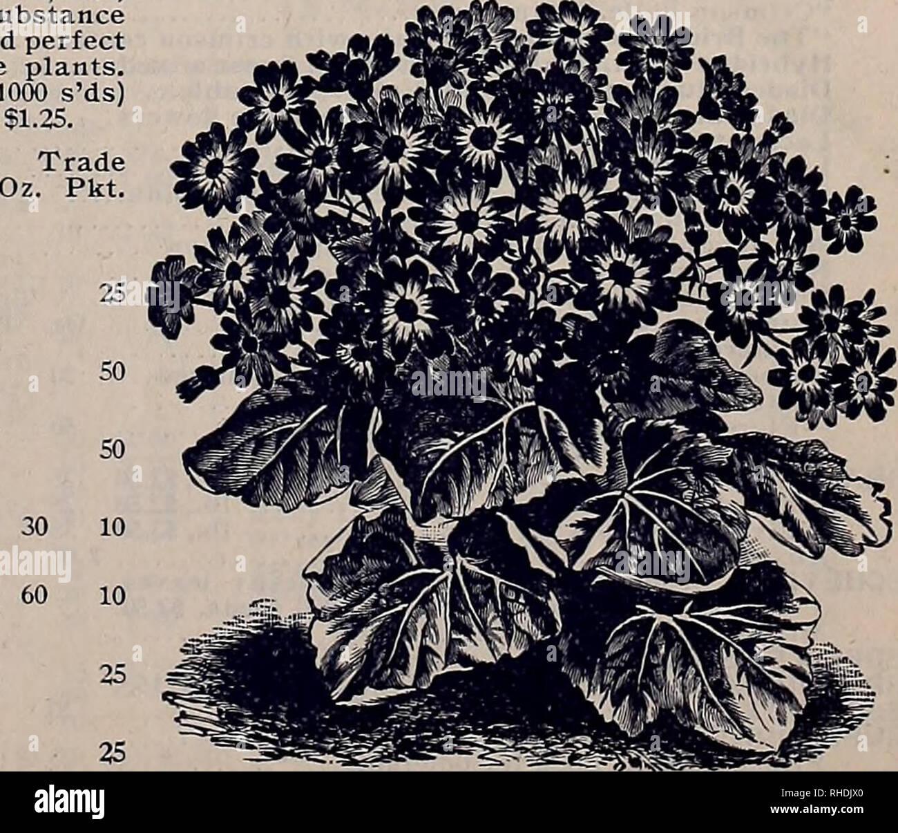 Buch Für Floristen Blumen Samen Kataloge Blumen Sämlinge Kataloge
