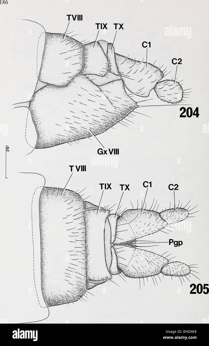 . Bonner zoologische nach 1550. Zoologie. Abb. 204-205: legeröhre von Symmerus annulatus (Mycetophilidae, Ditomyiinae), Exoskelett: (204) von der seitlichen; (205) von dorsal. Kundennr. in mm.. Bitte beachten Sie, dass diese Bilder sind von der gescannten Seite Bilder, die digital für die Lesbarkeit verbessert haben mögen - Färbung und Aussehen dieser Abbildungen können nicht perfekt dem Original ähneln. extrahiert. Bonn, Zoologisches Forschungsinstitut und Museum Alexander Koenig Stockbild