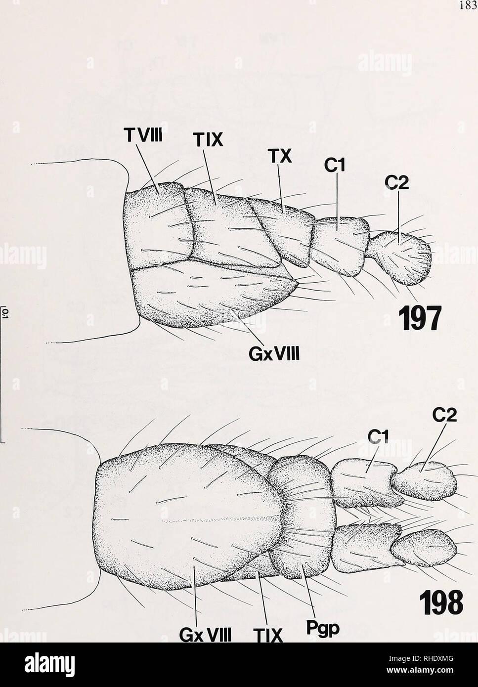 . Bonner zoologische nach 1550. Zoologie. Abb. 197-198: Exoskelett der legeröhre von Campylomyza flavipes (Cecidomyiidae): (197) von spät - ral; (198) von ventral. Kundennr. in mm.. Bitte beachten Sie, dass diese Bilder sind von der gescannten Seite Bilder, die digital für die Lesbarkeit verbessert haben mögen - Färbung und Aussehen dieser Abbildungen können nicht perfekt dem Original ähneln. extrahiert. Bonn, Zoologisches Forschungsinstitut und Museum Alexander Koenig Stockbild