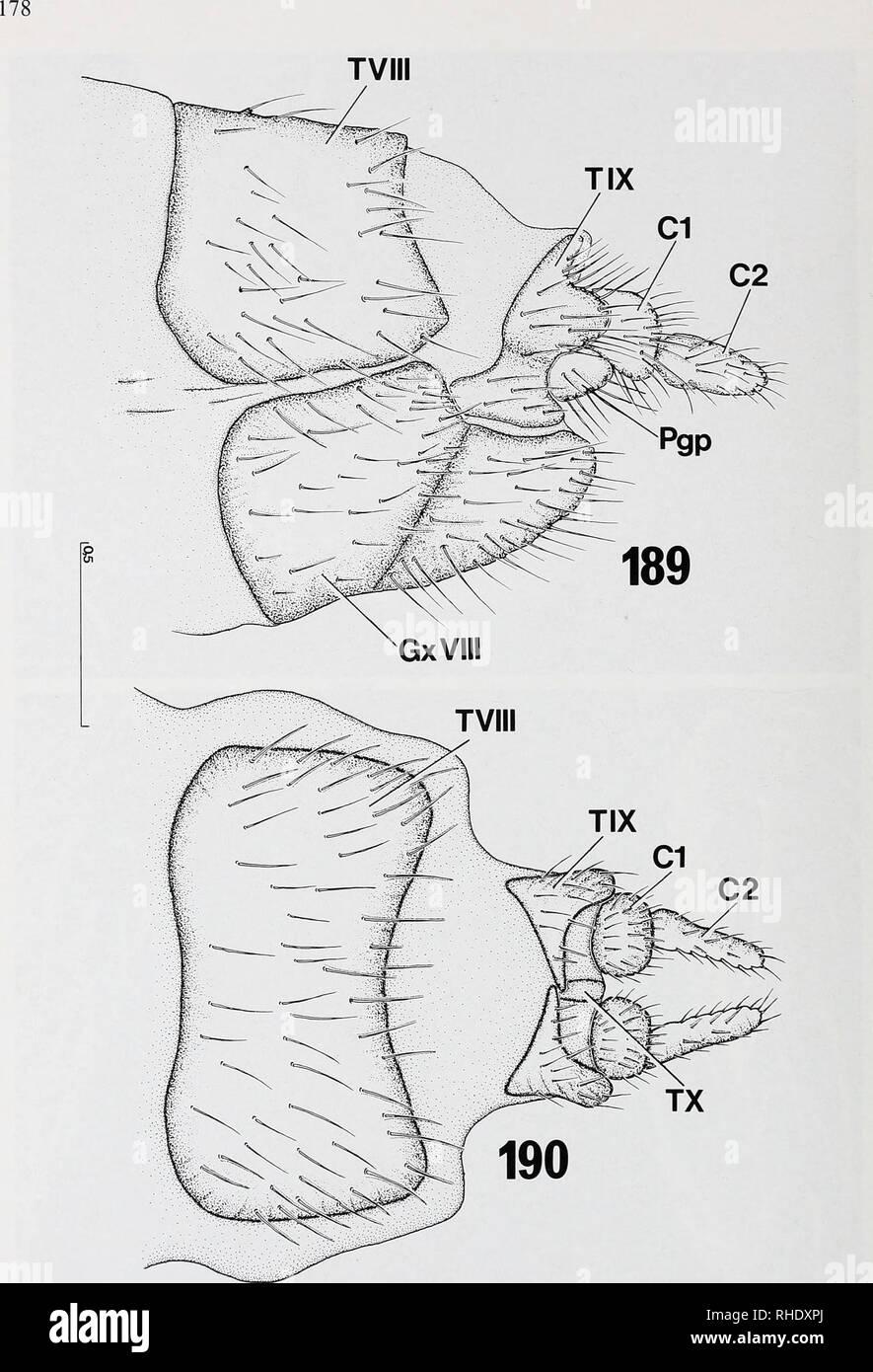 . Bonner zoologische nach 1550. Zoologie. Abb. 189-190: legeröhre von Penthetria funebhs (Bibionidae), Exoskelett: (189) von der seitlichen; (190) von dorsal. Kundennr. in mm.. Bitte beachten Sie, dass diese Bilder sind von der gescannten Seite Bilder, die digital für die Lesbarkeit verbessert haben mögen - Färbung und Aussehen dieser Abbildungen können nicht perfekt dem Original ähneln. extrahiert. Bonn, Zoologisches Forschungsinstitut und Museum Alexander Koenig Stockbild
