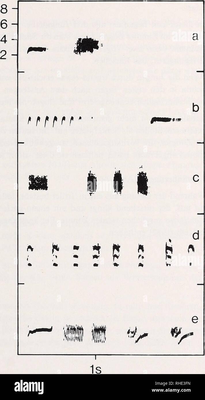 """. Bonner zoologische nach 1550. Zoologie. Kranke schon mehrere Tage vor dem Ausfliegen hörte man das Hämmern der Jungvögel aus der künstlichen Bruthöhle, in der sie vollends aufwuchsen. Nach dem Ausfliegen solche-ten sich die Jungen sofort gegenseitig auf und saßen dicht zusammengedrängt in Kon-takt (Abb. 28). Von jetzt"""" ab hörte man den Standortruf, mit dem Ausgeflogene Junge sterben Altvögel stand Ruheplatz hinweisen. kHz. Abb. 29:Rufe von sitta Weiß-headi: Lautäußerungen stammen aus der Voliere mit Ausnahme von Sterben b links und e, sterben H.-H. Berg-mann in Korsika aufgenommen hat. Ein standor Stockbild"""