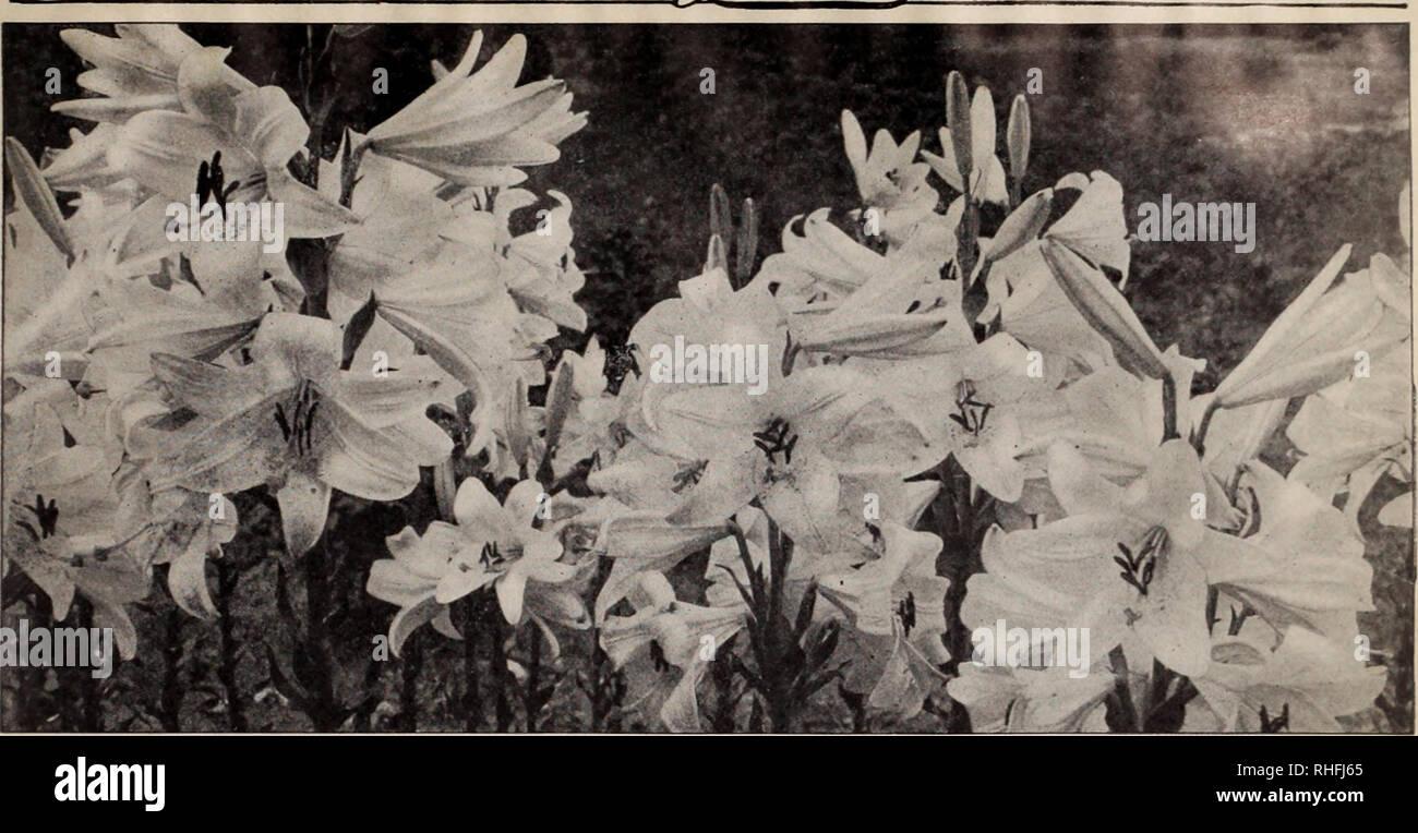 Boddington S Qualitat Blumenzwiebeln Samen Und Pflanzen Arthur T