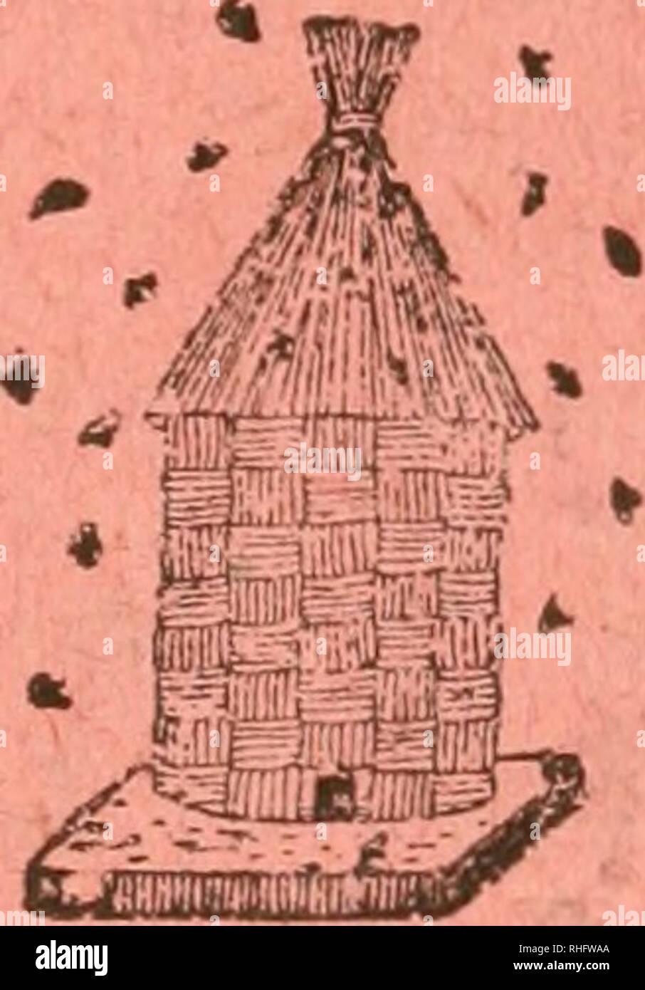 . - Boletà n de la Sociedad entomológica de España. Entomologie; Insekten. -^. Tomo V Junior - Mayo de 1922 Núms. 6-7 Entomológica BOLETÃN DE LA Sociedad de España Fundada el Q de Enero de 1918. ^^ â' Laboure et ordine SUMARIO Sección oficial. Sesiones celebradas El 2 de Oct y 2 de Mayo de 1922. f Comunioaclones. âCatálogo sistemático geográflco de los Coleóp - teros observados penà nsula de la - ibérica, Pirineos propiamente dichos y Baleares (continuación), Rdo. D. José María-a de la Fuente y Morales, PresbÃ-tero. âÃAs excursiones entomológicas durante El Verano de 1921 por e Stockfoto
